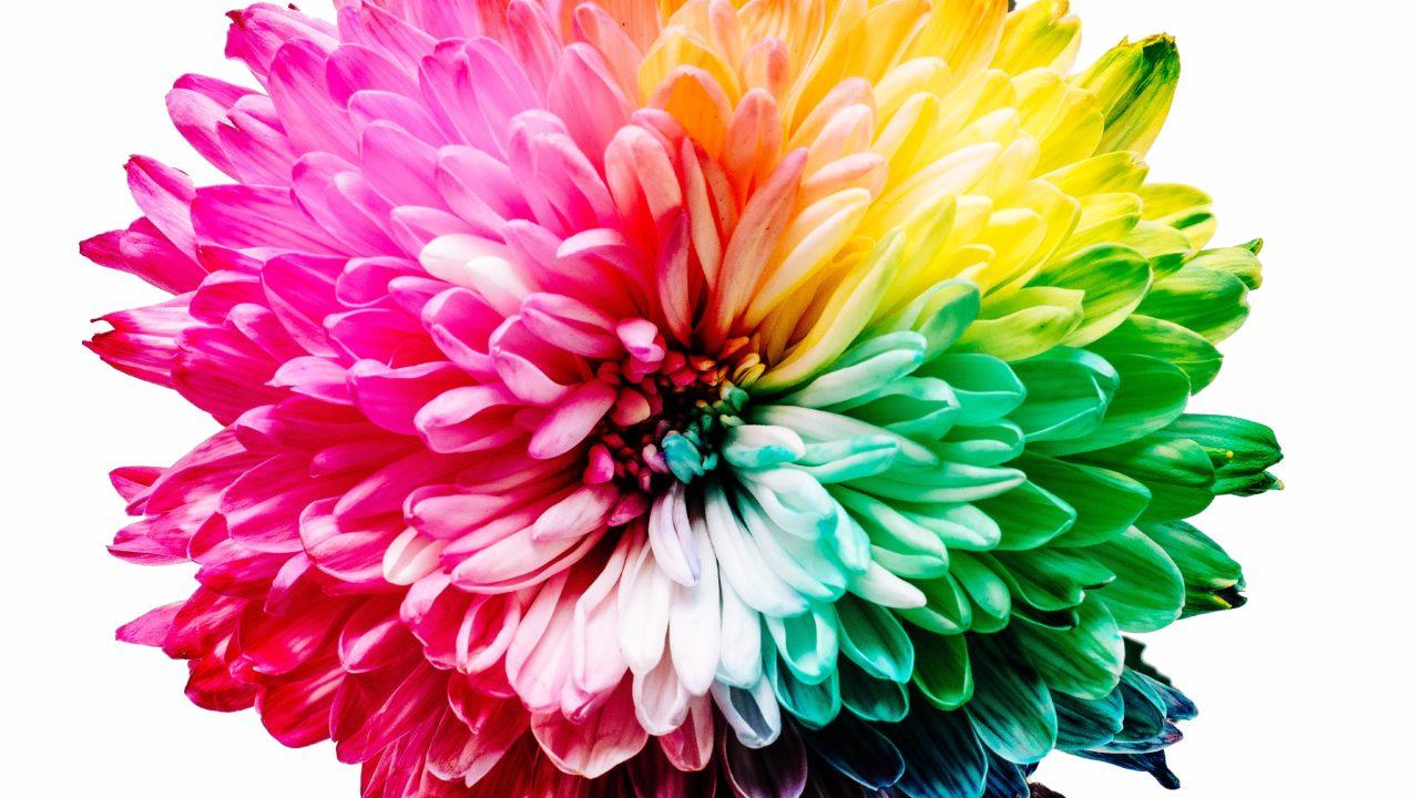 かけ ランキング 虹